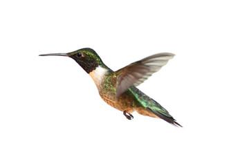 Fotoväggar - Isolated Ruby-throated Hummingbird