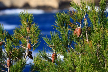 Red pine cone over natural background