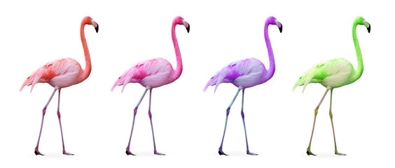 Compilation flamants roses