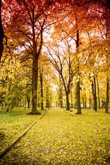 Fototapeta Park jesienią obraz