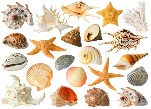 Isolated sea objects. Large collection of sea shells and stars isolated on white background