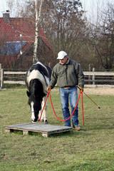 Pferdekurs 4