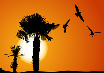 palms and seagulls at sunset