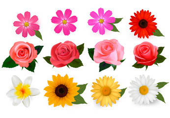 Big set of beautiful colorful flowers. Vector