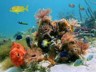 Colorful underwater marine life with tropical fish and feather duster worms in the Caribbean sea