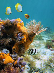 Underwater marine life in the Caribbean sea with a feather duster worm, colorful sponges and tropical fish