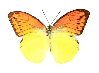 Orange and yellow butterfly