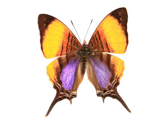 Orange and Purple butterfly