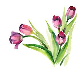Watercolor -Purple Tulips-