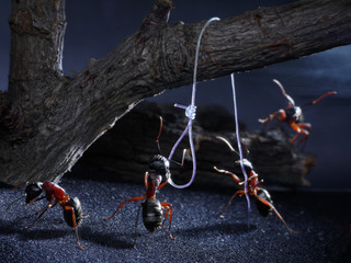 ants execute for loss of native smell, lynch law, thriller