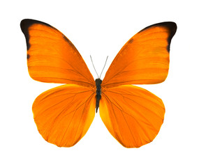 tropical bright orange butterfly