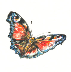 Butterfly-watercolors