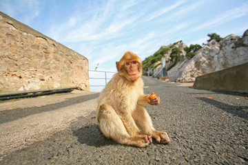 Monkey sitting on the road