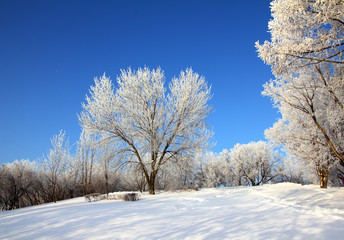 Wall Mural - snow winter park under blue sky