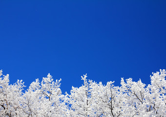 Wall Mural - ice winter tree branches under sky