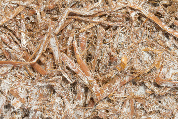 Close up image of mushroom compost
