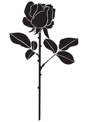silhouette of the rose