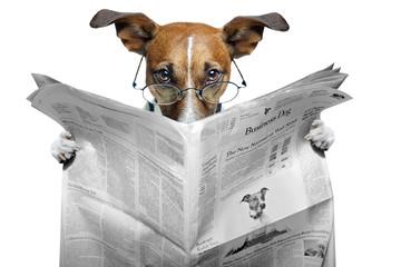 Obraz dog reading a newspaper - fototapety do salonu