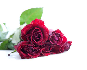 Bouquet of red roses on a white background.
