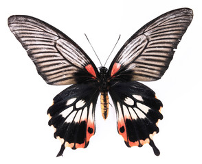 Black and red utterfly