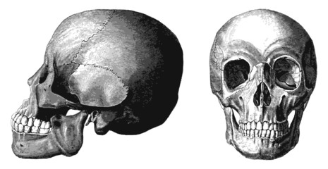 Engraved illustrations of skull.