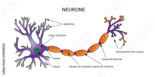 Web art design neuron diagram neurone structure mdecine 10 stock web art design neuron diagram neurone structure mdecine 10 ccuart Images