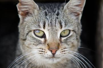 Katze wild 1