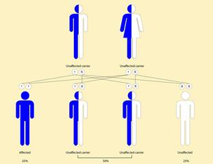 Thalassemia pattern of inheritance