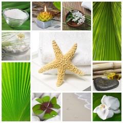 Wellness bilder grün  Bilder und Videos suchen: orchidee, Repräsentative Kategorie ...