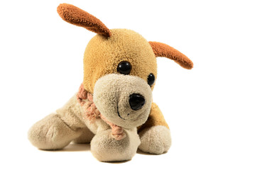 a small toy dog