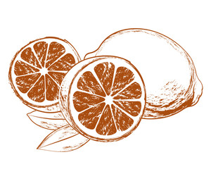 Vector Lemons with leaves