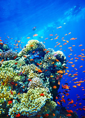 Group of coral fish  water.