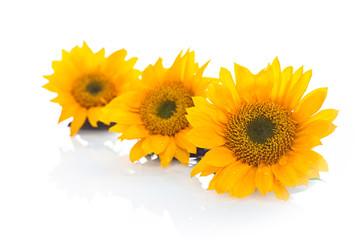 Yellow Three