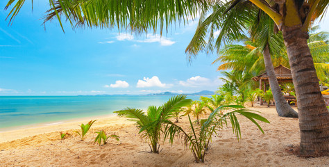 tropical beach. Koh Samui, Thailand, Maenam beach