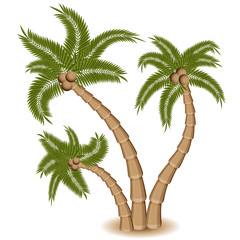 Three Palm Tree Group