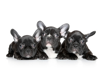 Türaufkleber Französisch bulldog French bulldog puppies on a white background