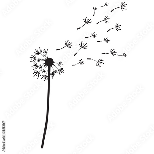 dandelion vector outline silhouette stock photo and royalty free images on pic. Black Bedroom Furniture Sets. Home Design Ideas