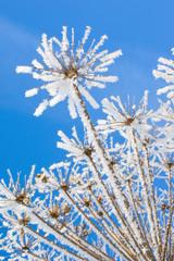 Fototapete - Snow flower