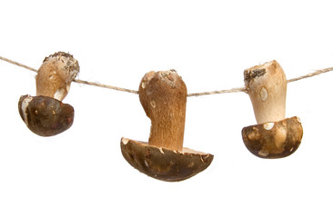 Mushrooms on a string