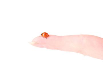 ladybird on finger isolated on white