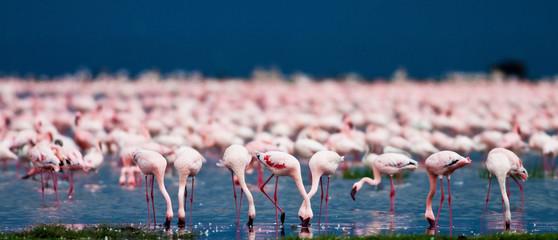 Foto op Canvas Flamingo Flamingos at Lake Nakuru, Kenya