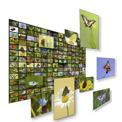 Wall of butterfly pictures