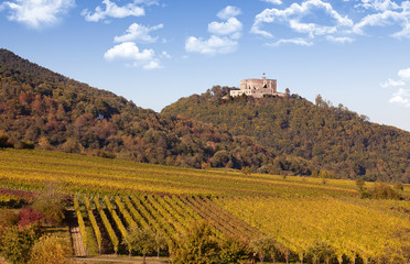 Hambacher Schloss und Weinberge