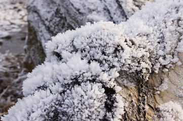 Frost on a log