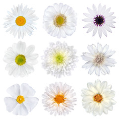Various Selection of White Flowers Isolated