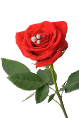 Red rose with a ring with jewels