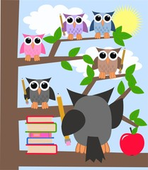 school learning owls