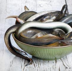 Fish lamprey