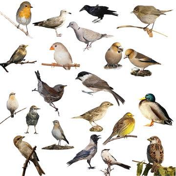 set birds isolated on white background