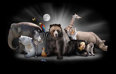 Zoo Animals at Night with Black Background Wall mural